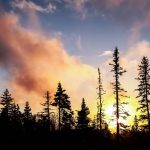 Spruce trees Alaska